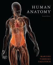 Physiology Videos Human Anatomy Videos Www Uocodac Com