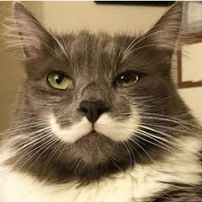 Hipster Cat Meme - hamilton hipster cat on twitter burnt my tongue on pizza cats