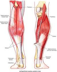 Anatomy Of Body Muscles Pin By Tony Lu On Neck Pinterest