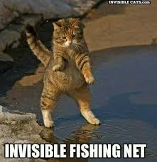 Invisible Cat Meme - 93 best invisible cats images on pinterest cat cats and funny cat