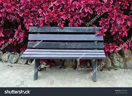 Chair In Garden Chair Garden Violet Leaves Background Stock Photo 68962687