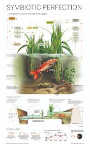 symbiotic perfection how energy flows in the rice fish system