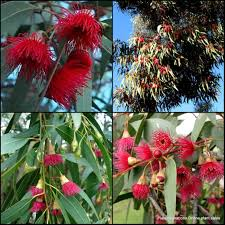 native plants in australia plant inspirations plant nursery sales online delivered