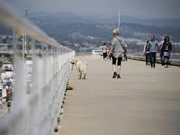 Gambar laut musim dingin Boardwalk anjing hewan gang