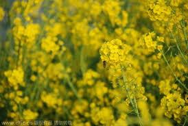 Best Spring Flowers - early bloomers best times to view spring flowers in beijing 1