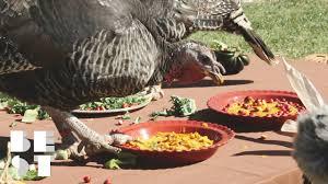 celebrate the turkeys this thanksgiving at farm sanctuary best