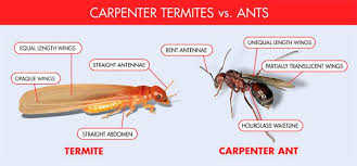 Winged Termites In Bathroom Termites Fly Pest Control Pinterest Flying Termites And Insects
