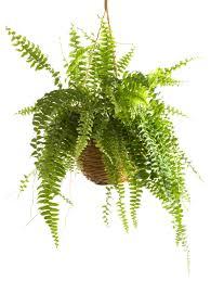 Best Plants For Bathrooms Bathroom Stones Plants For Bathrooms Decorating Best Plants For