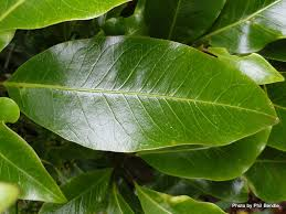 native plants of new zealand t e r r a i n taranaki educational resource research analysis