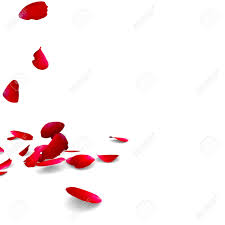 petals of roses fall on a floor stock photo picture and royalty