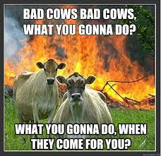 What You Gonna Do Meme - bad cows bad cows what you gonna do what you gonna do when they