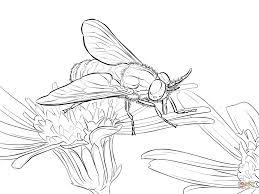 twin lobed deerfly coloring page free printable coloring pages