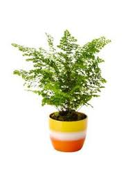Great Indoor Trees Hgtv by 9 Ways To Pot Your Houseplants Hgtv Magazine Houseplant And