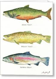 fishing greeting cards fine art america