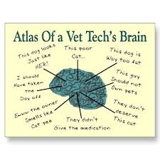 Vet Tech Memes - other template category page 89 spelplus com
