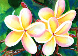 plumeria flower hawaii tropical plumeria flower 213 painting by donald k