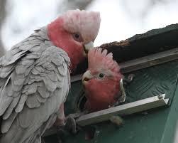 birds in my backyard u2013 nov 1 2012 kimberley jane pryor