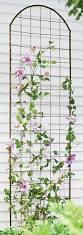 Garden Trellis Netting How To Grow Clematis Gardener U0027s Supply