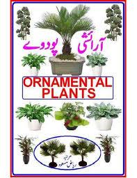 plant urdu