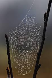 halloween nature background spider best 25 spider webs ideas on pinterest morning dew macro