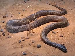 imagenes animales australia animales peligrosos en australia