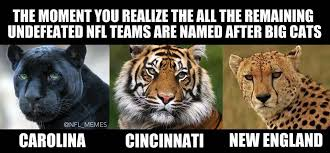 Nfl Bandwagon Memes - remaining undefeated nfl teams have something in common imgur