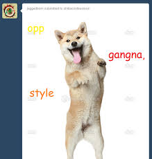 Doge Meme Tumblr - the shibes are in