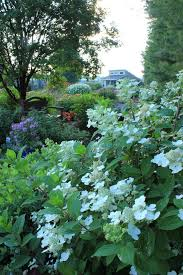 hydrangeas how to prune them hgtv