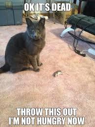 Mouse Memes - he caught a mouse meme guy