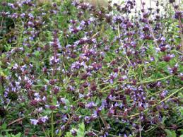 flowers san diego favorite california plants
