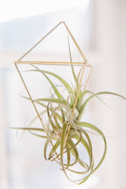 mr kate diy geometric air plant cages