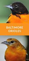 75 best bird watching images on pinterest beautiful birds