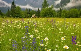Natural Scent Olorful Tag Wallpapers Lovely Nice Freshness Beautiful Fragrance