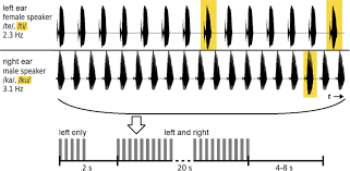 influence of attention on speech rhythm evoked potentials first