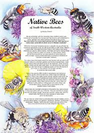 society for growing australian native plants native bee poster waiss u2013 western australian insect study