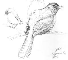 new england sketchbook 2011 u2013 drawing the motmot