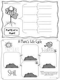 flowers parts of a plant worksheet 1 parts of a plant science