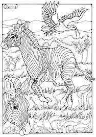 308 zebras images wild animals nature