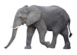 Poem The Blind Man And The Elephant The Blind Men And The Elephant Capture The Moment In Words