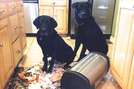 the best dog proof trash can u2013 pets principle