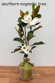 sympathy gift seeds of sympathy gift memorial tree