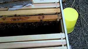 installing honey bees in the backyard hive youtube