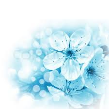 light blue flowers blue flowers on white background stock photo colourbox
