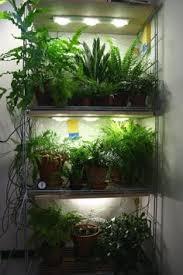 attractive grow lights for indoor plants phillips plant light