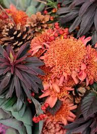 Picture Of Mums The Flowers - ten favorite mum varieties for cutting love u0027n fresh flowers