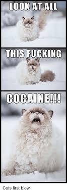 Cat Cocaine Meme - fancy 2135 best cats images on pinterest wallpaper site