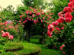 Flowers In Garden Thousands Of Splendid Roses Great Beauty And Luscious Scent