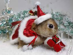 Cute Christmas Meme - beautiful animals in christmas photography 20 photos of cute