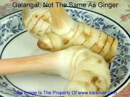 galangal cuisine galangal root important food ingredient and dang it i