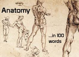 Human Anatomy Words Anatomy In 100 Words Location And Movement Crossfit Impulse